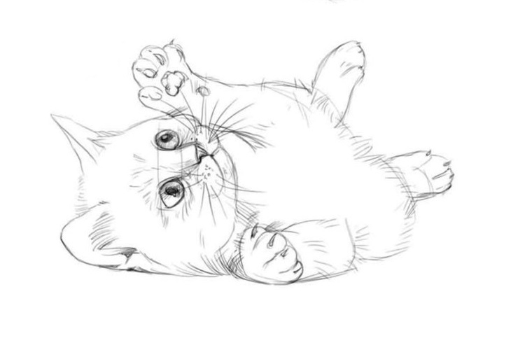 Картинки кошки карандашом для срисовки 011