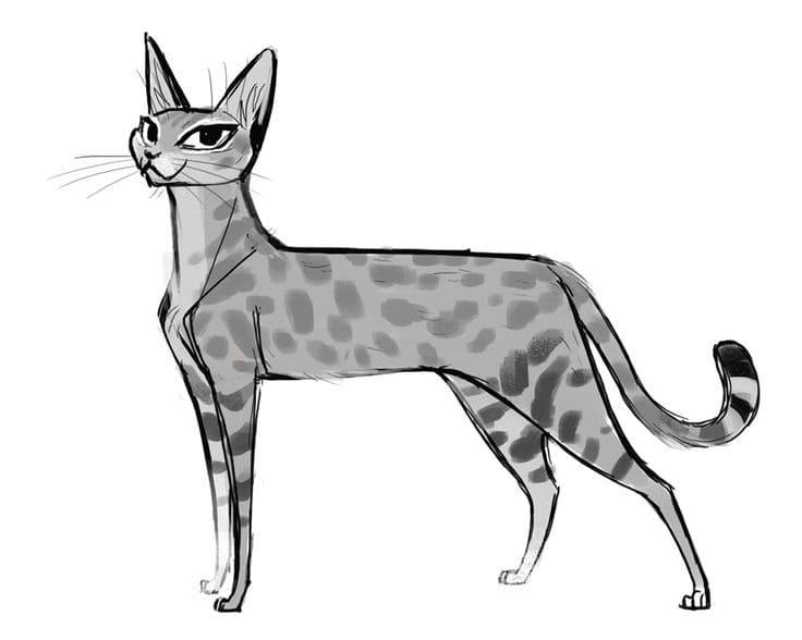 Картинки кошки карандашом для срисовки 022