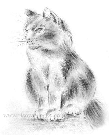 Картинки кошки карандашом для срисовки 023