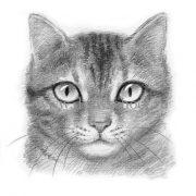 Картинки кошки карандашом для срисовки 024