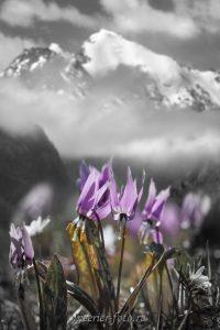 Картинки красивые черно белые цветы020