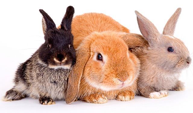 Картинки кролики для детей   подборка 025