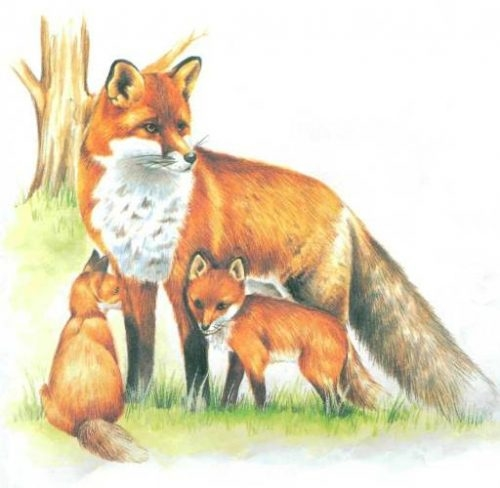 Картинки лиса с лисятами для детского сада002