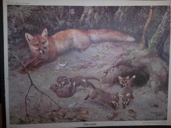 Картинки лиса с лисятами для детского сада003