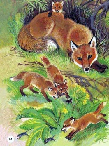 Картинки лиса с лисятами для детского сада022