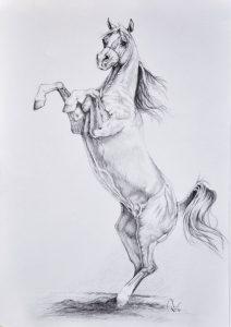 Картинки лошади для срисовки карандашом 028