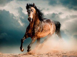Картинки лошади с Днем Рождения   подборка 020