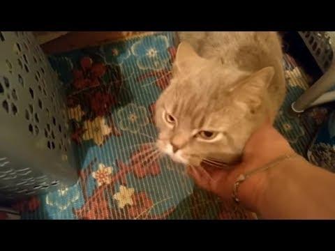 Картинки люблю своего котика   очень милые (12)