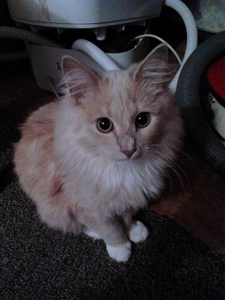Картинки люблю своего котика   очень милые (19)