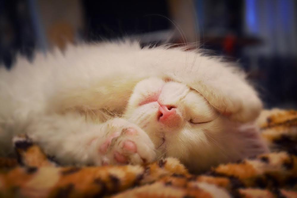 Картинки люблю своего котика   очень милые (4)