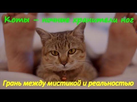 Картинки люблю своего котика   очень милые (5)