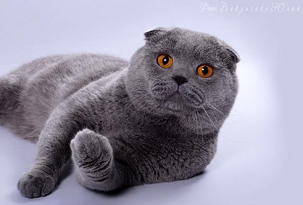 Картинки люблю своего котика   очень милые (6)