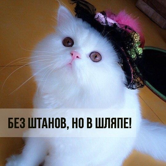 Картинки мой ты котик   подборка фото 003