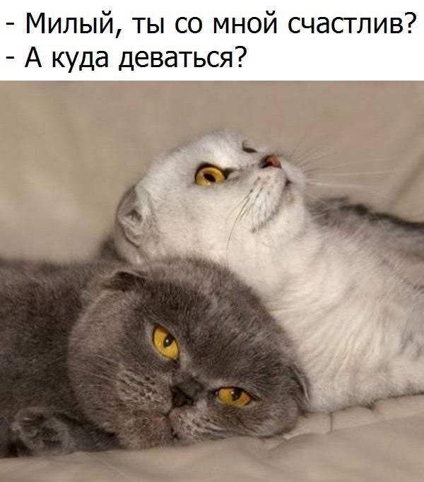 Картинки мой ты котик   подборка фото 005