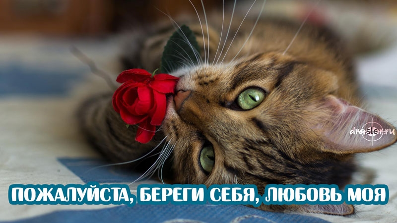 Картинки мой ты котик   подборка фото 008