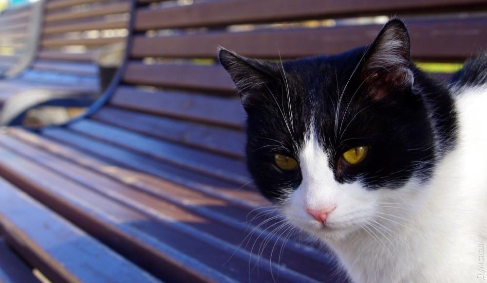 Картинки мой ты котик   подборка фото 010