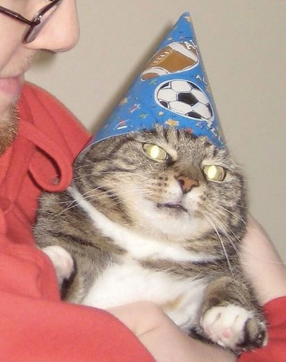 Картинки мой ты котик   подборка фото 011