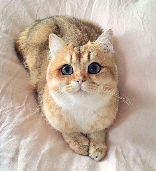 Картинки мой ты котик   подборка фото 013