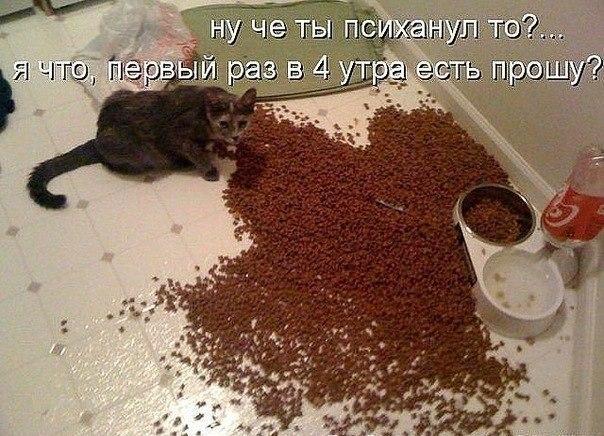 Картинки мой ты котик   подборка фото 014