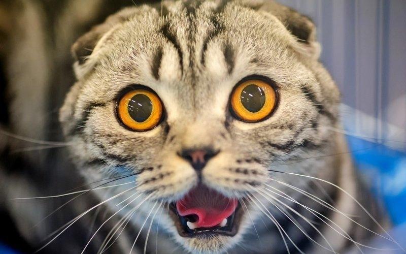 Картинки мой ты котик   подборка фото 015