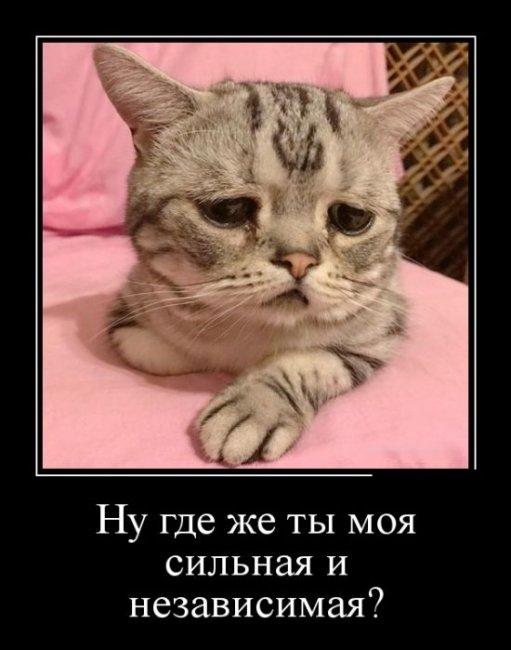 Картинки мой ты котик   подборка фото 016
