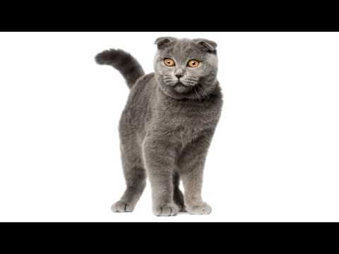 Картинки мой ты котик   подборка фото 017