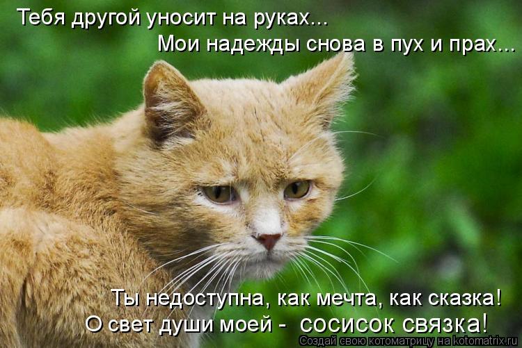 Картинки мой ты котик   подборка фото 020