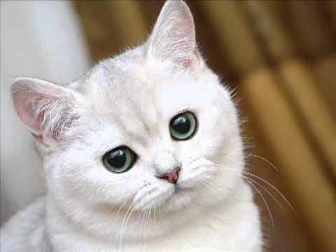 Картинки мой ты котик   подборка фото 021