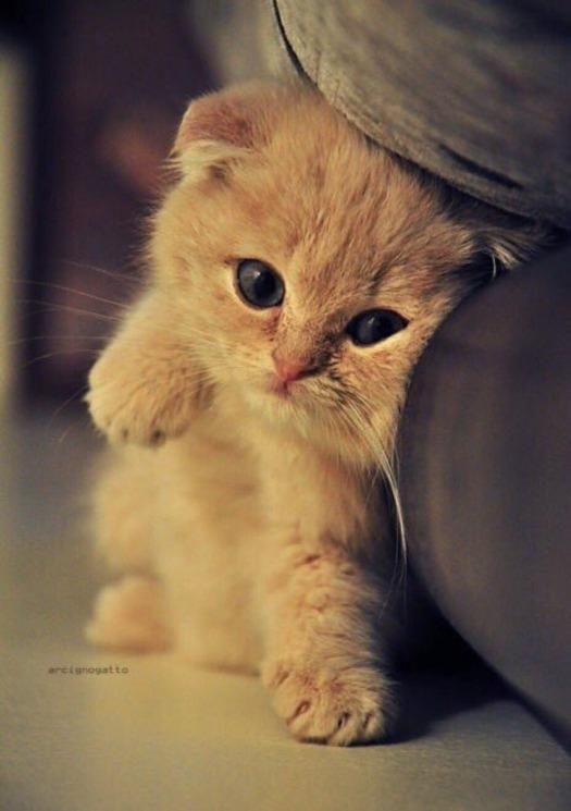 Картинки мой ты котик   подборка фото 022