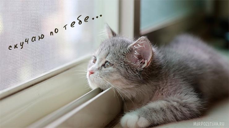 Картинки мой ты котик   подборка фото 023