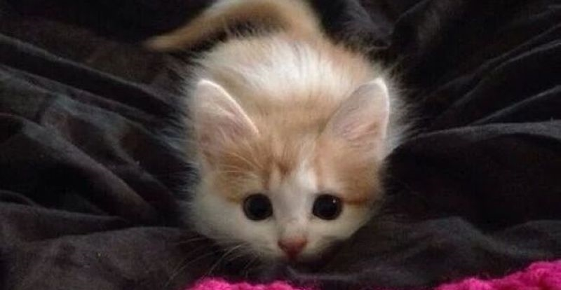 Картинки мой ты котик   подборка фото 024