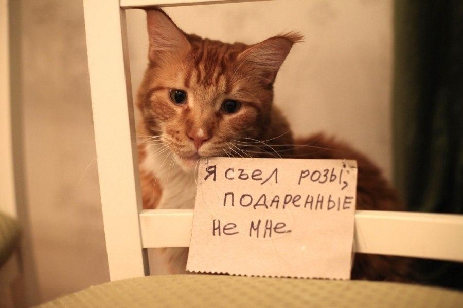 Картинки мой ты котик   подборка фото 025
