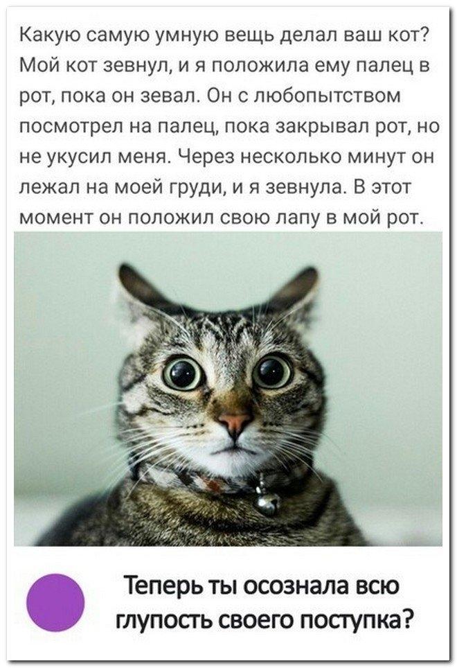 Картинки мой ты котик   подборка фото 027
