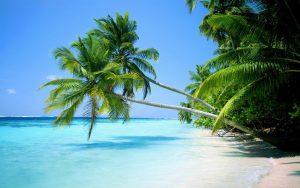 Картинки море и пальмы на рабочий стол (18)