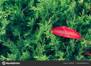 Картинки начало осени природа   лучшие обои (19)