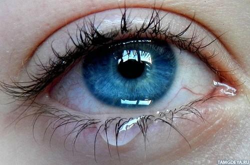 Картинки на аву глаза карие   мужские и женские 004