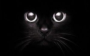 Картинки на аву кошка черная   фото 019