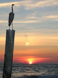 Картинки на закате красивые   подборка023