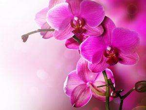 Картинки на рабочий стол орхидей   подборка (23)