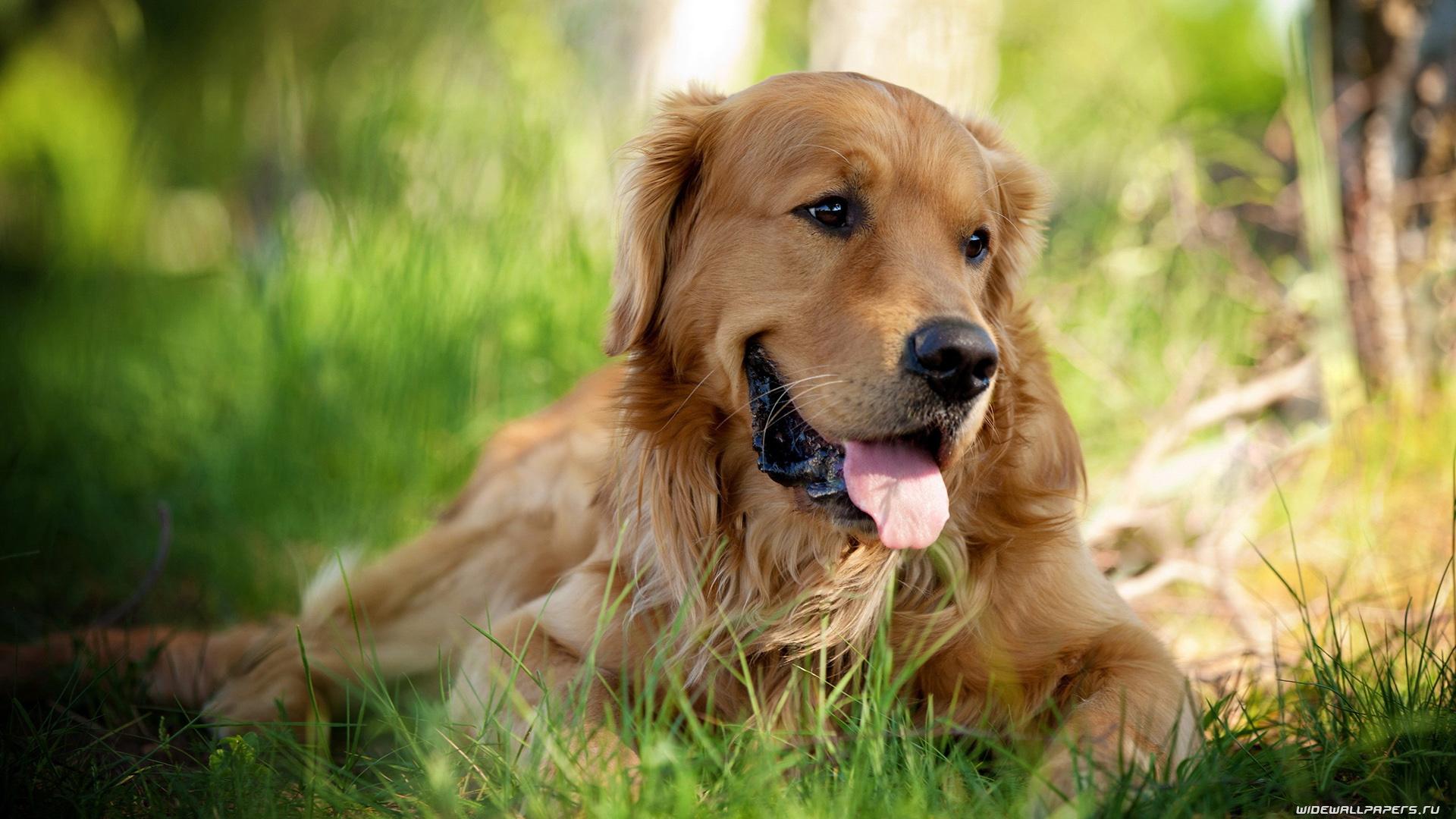 этой самые красивые картинки всех собак масло начнет