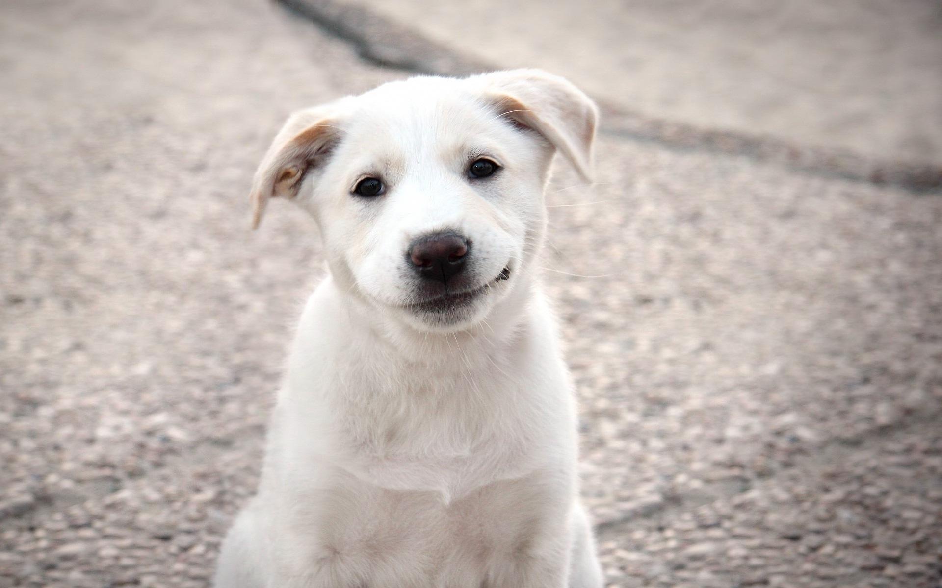 понятно, добрый пес картинки мен парвах олна