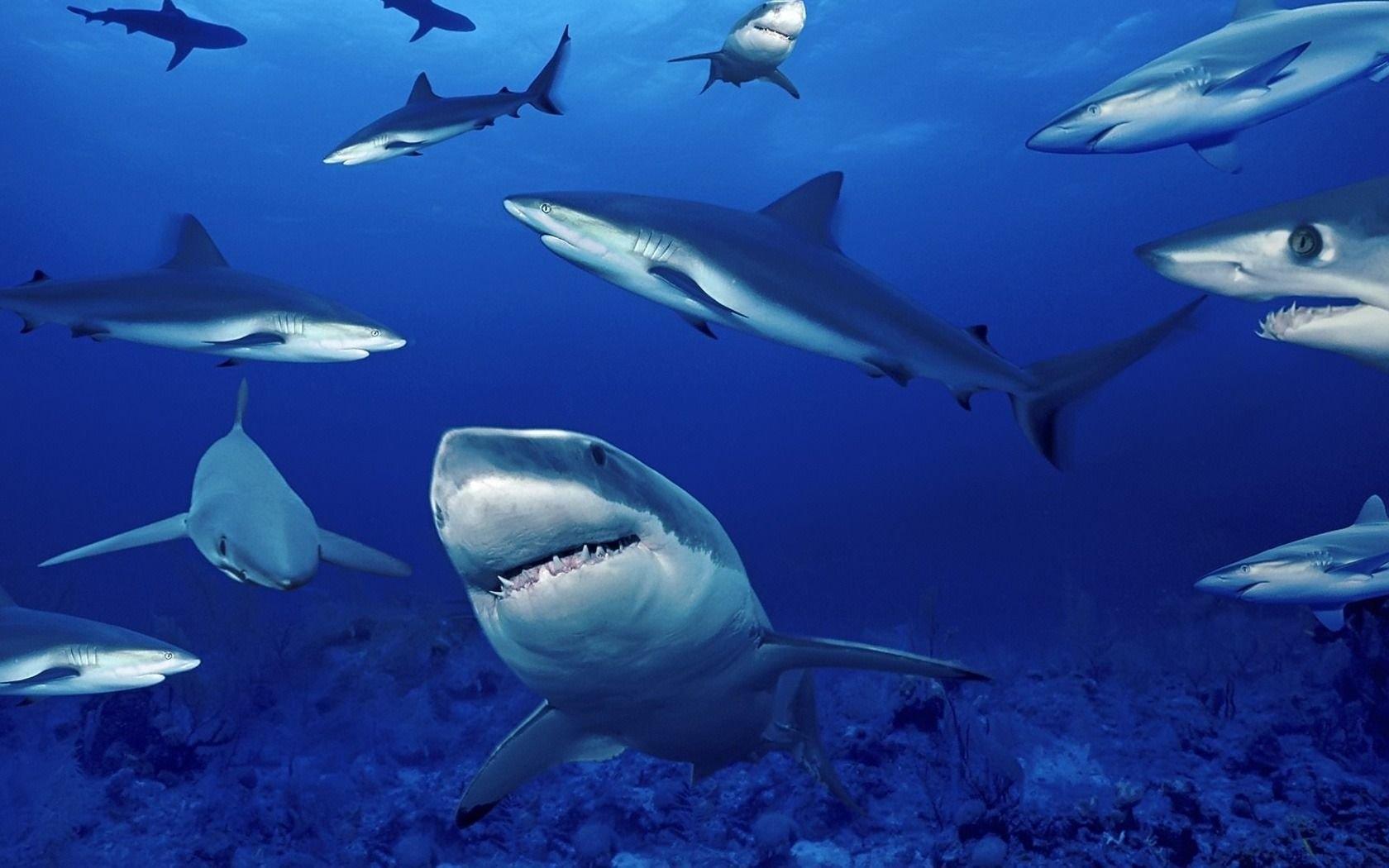 Картинки на телефон акула   подборка (12)