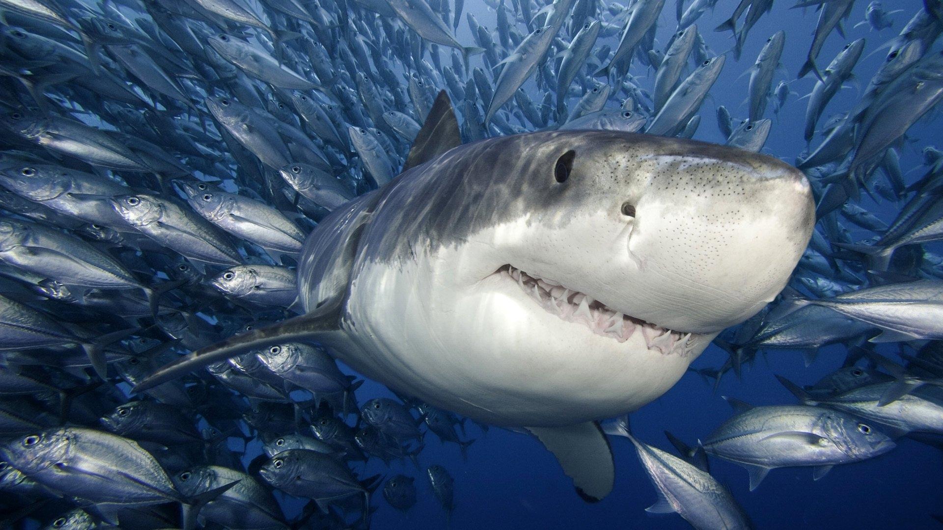 Картинки на телефон акула   подборка (13)