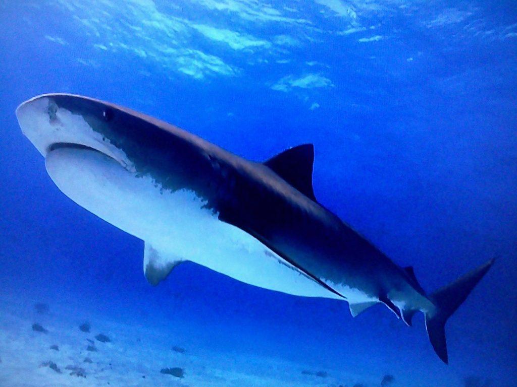 один акулы всех видов фото с названиями университет получила