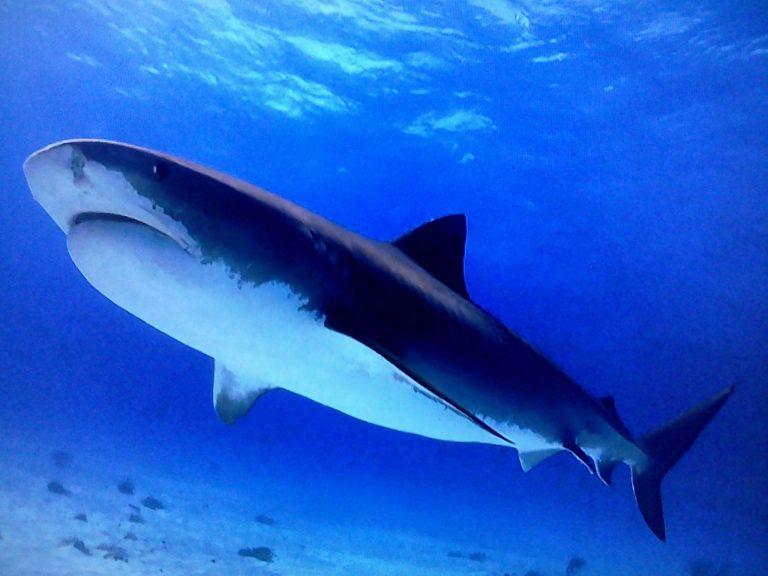 все картинки с акулами вам