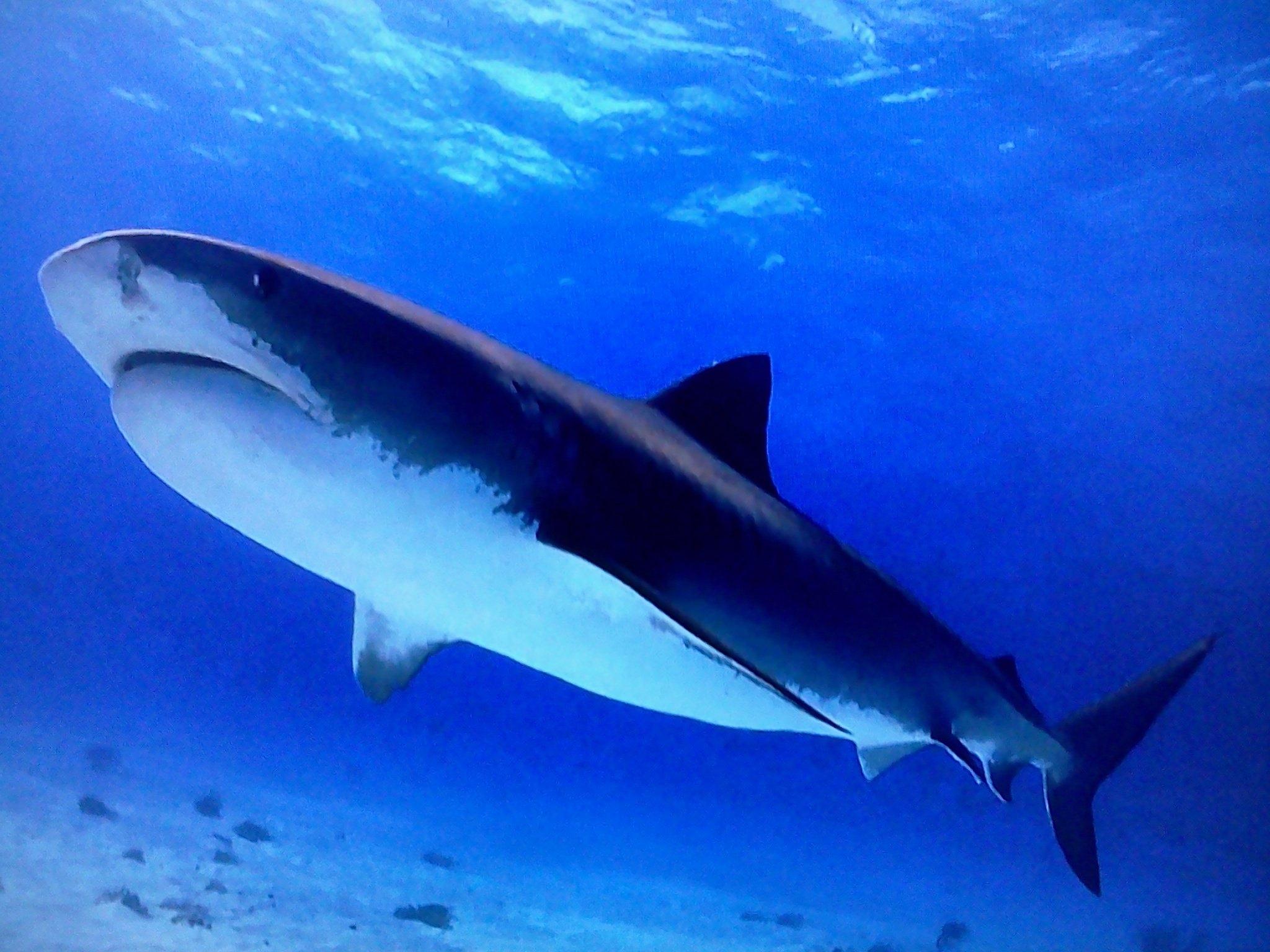 Картинки на телефон акула   подборка (16)