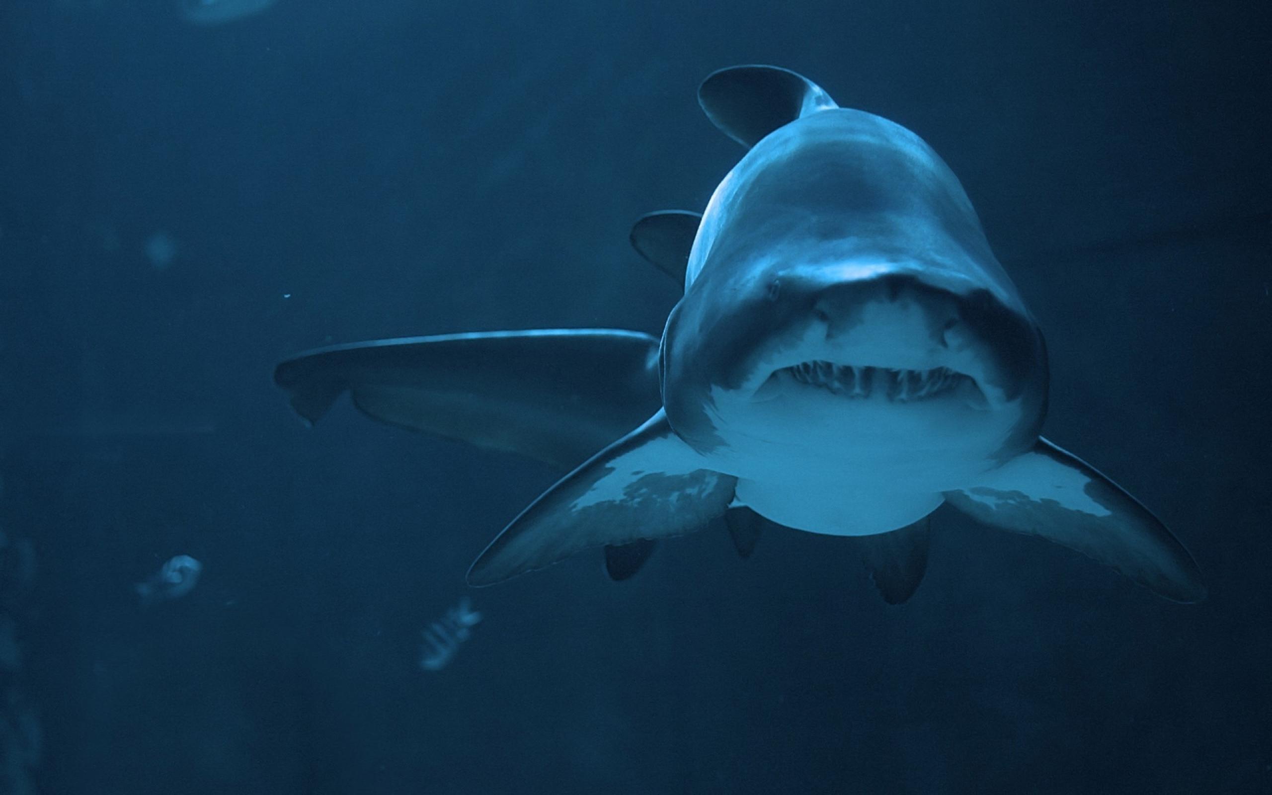 Картинки на телефон акула   подборка (17)