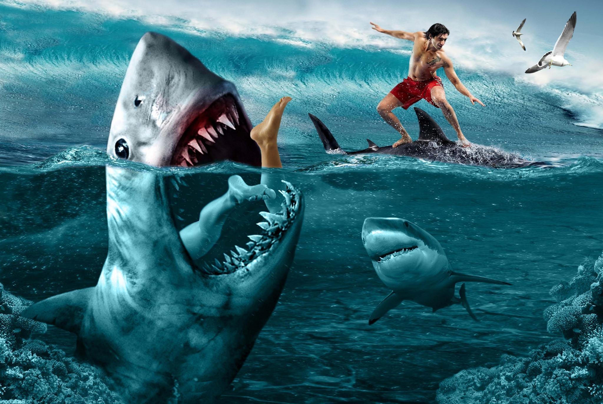Картинки на телефон акула   подборка (18)