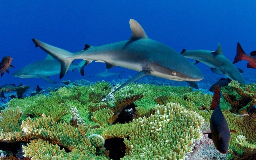 картинки на тему обитатели океана вафли