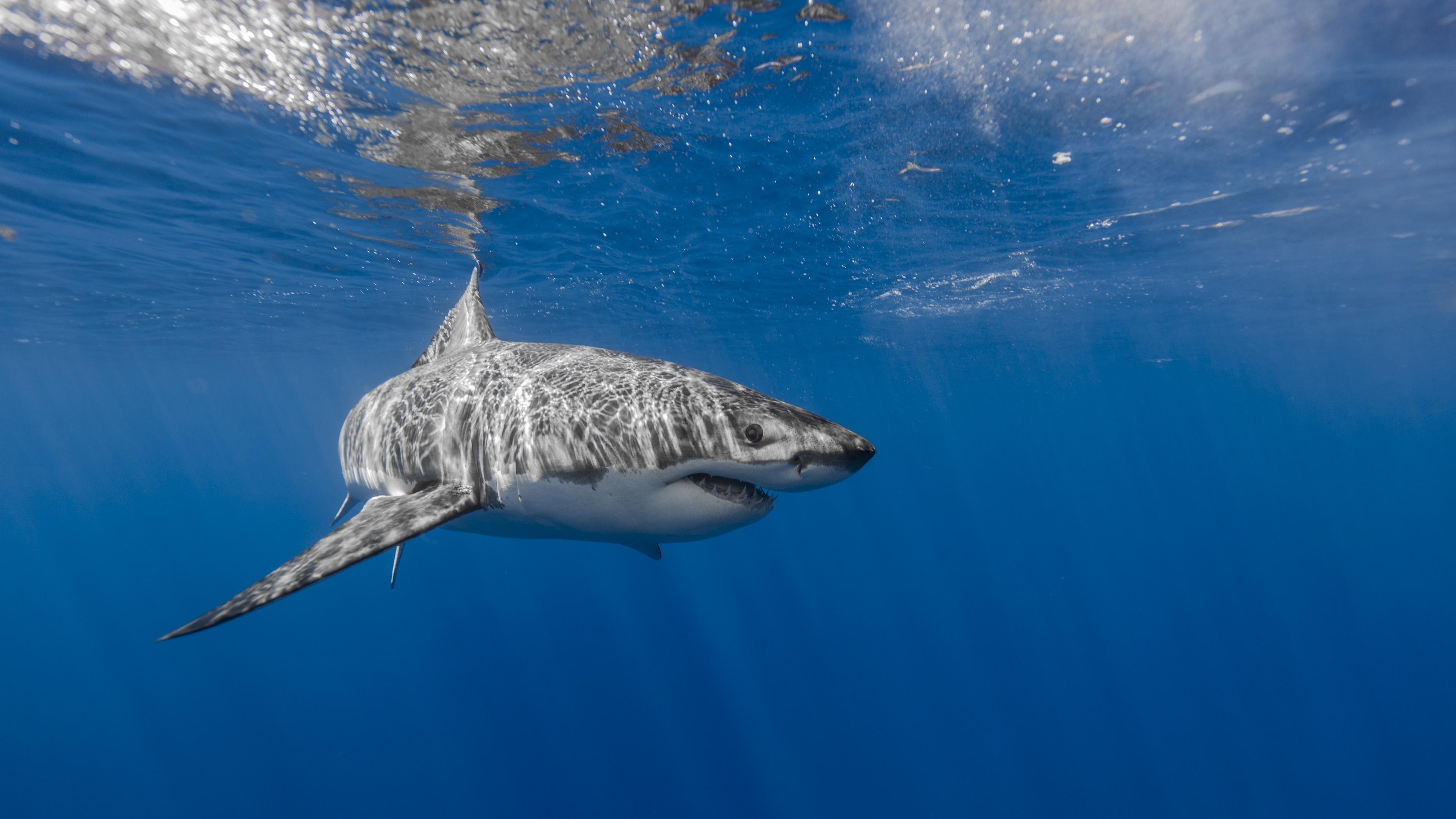 Картинки на телефон акула   подборка (2)